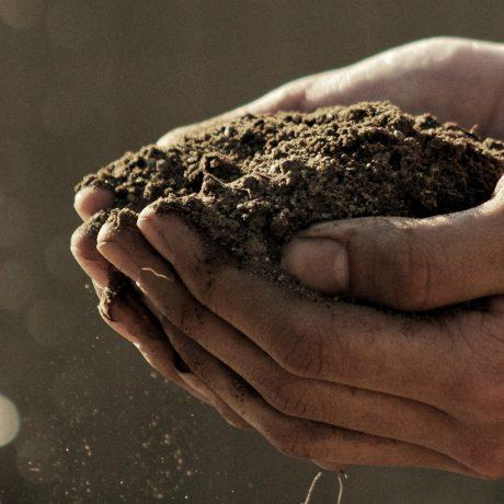 ecologia_sostenibilidad